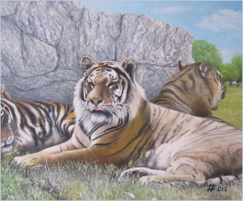 weiße sibirische tiger